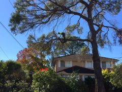 Tree Trimming Services in Sydney