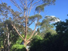 Tree Cutting Services in Sydney