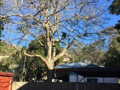 Tree Branch Removal Services in Sydney
