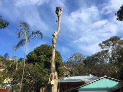 Tree cutting job by a professional