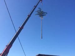 Tree Moving to another place