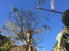 Tree Branch Cutting and Removal Services