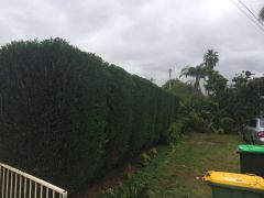 Tree Care Services in Sydney