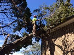 Emergency Tree Removal Services by Ben's Tree and Garden