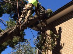 Tree Removal - Emergency Services