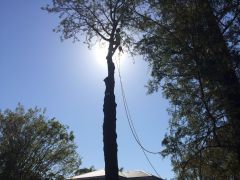 Professional Tree Cutting Services in Sydney