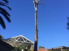 Tree Cutting - Ben's Tree and Garden