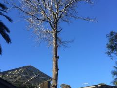 Tree Cutting Services by Ben's Tree and Garden