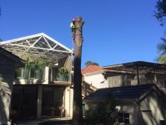 Tree Cutting by Ben's Tree and Garden